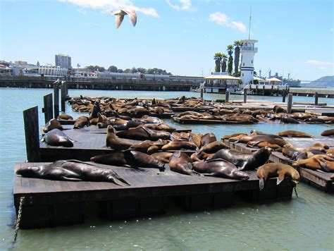 11 Fun San Francisco Attractions That Your Family Will