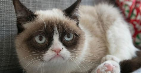 grumpy cat vine  reveal playful side  sour puss