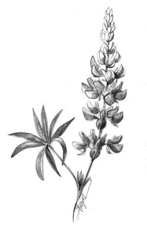 Lovely Lupines | Lupine flowers, Story tattoo, Tattoos