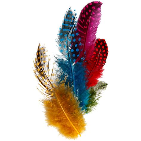 guinea fowl feathers approx  pc asstd colours