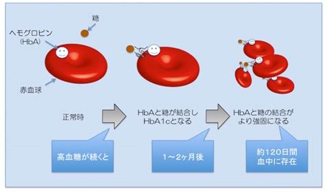 ヘモグロビン a1c と は