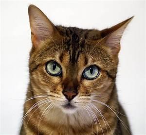 Wie Fange Ich Eine Katze : kira oder wie man s eine katze fotografiert foto bild natur katzen tiere bilder auf ~ Markanthonyermac.com Haus und Dekorationen