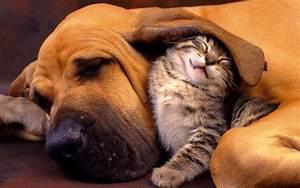 Hund und katze als beste freunde   HD Hintergrundbilder