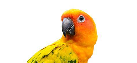Pet Bird & Chicken Supplies  Bird Store Petco