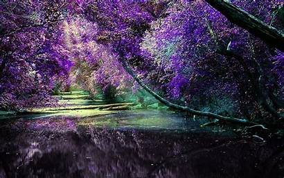 Lilac Nature Wallpapers Colors Bush Bushes Forests