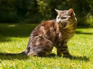 cat aggression aggression in cats overview petmd