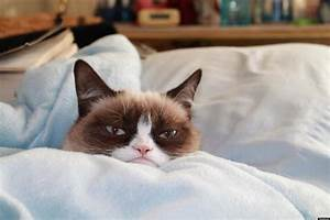 Grumpy Cat Kitten Photos Revealed (PHOTOS)