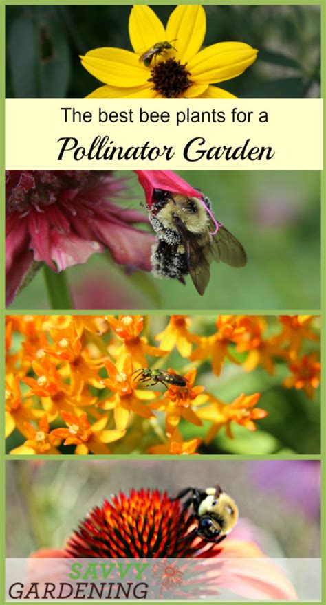 choosing the best bee plants for a pollinator garden