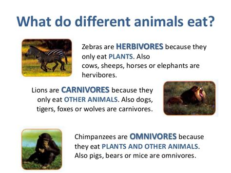 animals animal unit groups omnivores pigs bears mice