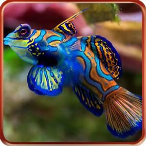 Aquarium Fische Süßwasser Liste : aquarium live wallpapers apps f r android ~ Watch28wear.com Haus und Dekorationen