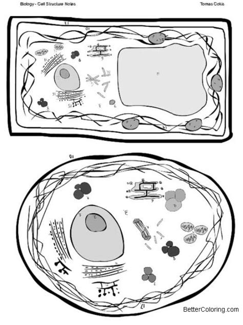 plant  animal cells coloring pages cell structures