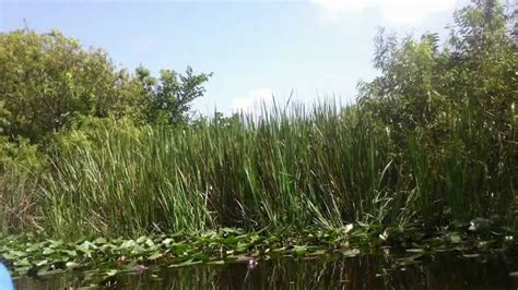 Everglades Airboat Tours South Florida by Everglades Airboat Tour In Everglades City South Florida
