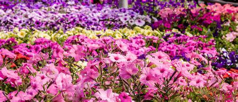 country basket garden centre niagara greenhouse nursery