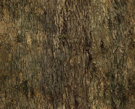 barkdecidious  background texture tree bark