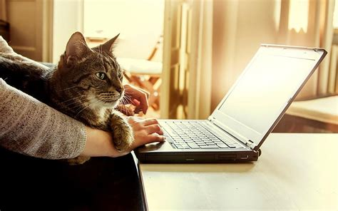 cat why laptop keyboard cats laptops irresistible pets shutterstock