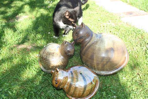 Katzen Vom Beet Fernhalten by Katzen Verscheuchen Garten Katze Mit Harmlosen