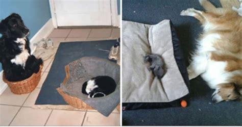 bully cats cat bullies dogs stole