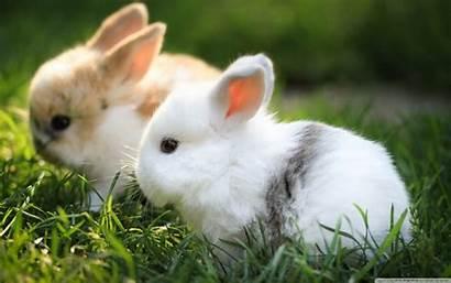 Rabbits Bunnies Animals Wallpapers 4k Wide κλεοπατρα