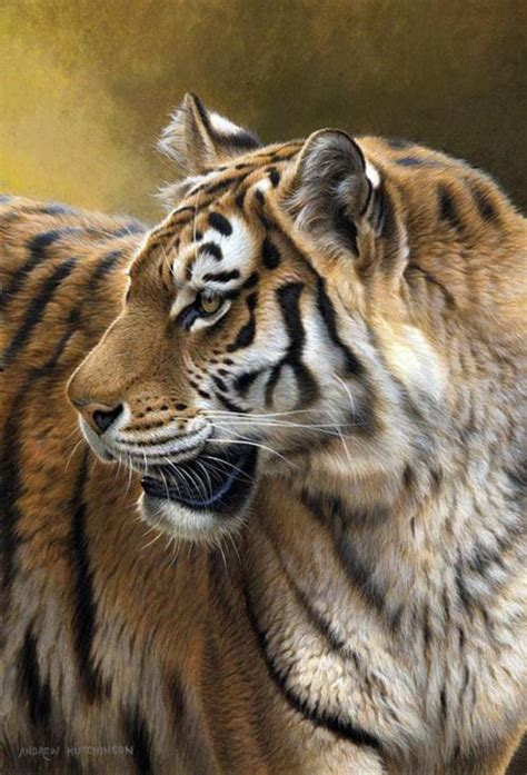wildlife artist andrew hutchinson art kaleidoscope