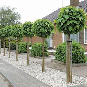 kugel trompetenbaum online kaufen bei ahrenssieberz With garten planen mit baum balkon winterhart