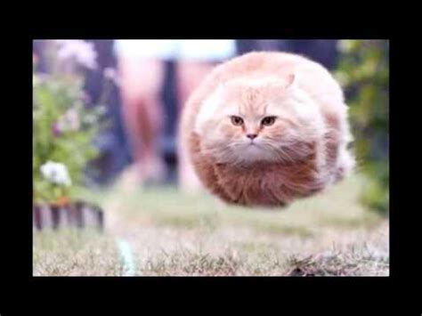 lustige sprueche witzige tierbilder youtube