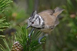 Heimische Singvögel Bilder : singv gel detlef hase naturfotos ~ Whattoseeinmadrid.com Haus und Dekorationen