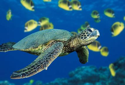 millions  sea turtles trapped  fishing nets futurity