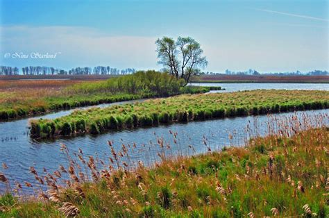 Beautiful wetlands at Long Point – Focusing on Wildlife