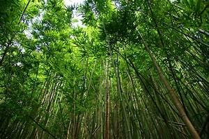 Verkaufsoffener Sonntag 07 05 17 : photo gratuite bambou des for ts image gratuite sur pixabay 756805 ~ Eleganceandgraceweddings.com Haus und Dekorationen