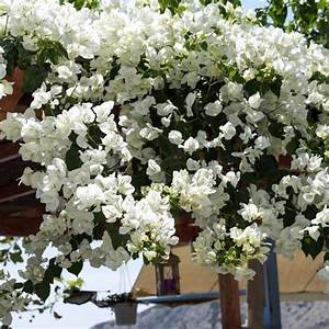 Quoi Planter En Automne : arbustes l gumes quoi planter en juin ooreka ~ Melissatoandfro.com Idées de Décoration