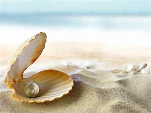 Wallpaper seashell, beach, sand, perl, tropical, beach ...
