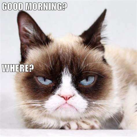 Grumpy Cat Good Morning Meme - good morning where http cheezburger com 9037694720 grumpy cat good morning meme grumpy cat