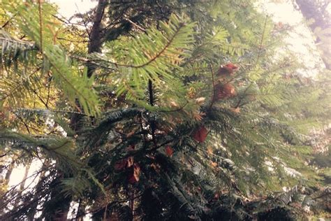 der 246 kologische weihnachtsbaum energieleben