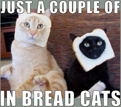 Cat In Bread Meme - no deposit online casino games for real money and pokies galore mazes image 4312970 by