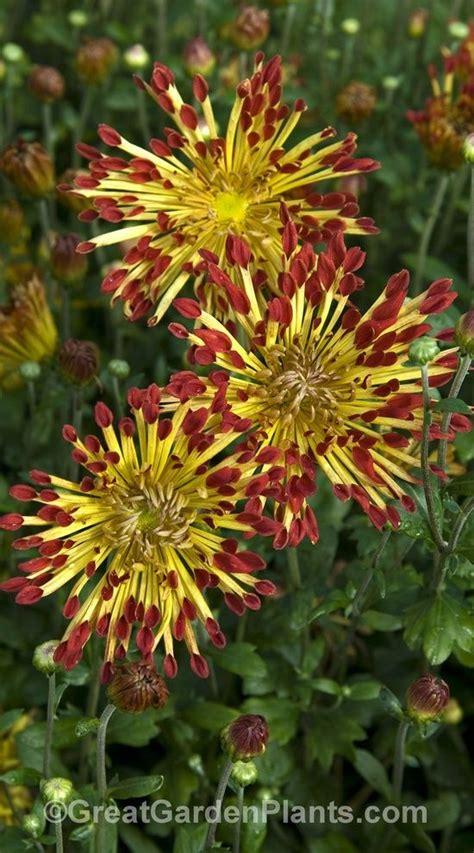 zone 4 flowers pin by joyce karpinski on outdoor pinterest