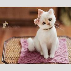 Sehr Schöne Und Süße Katze Name Ist Marusya Von