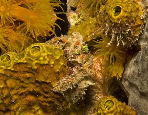 decorator crabs and sea sponges exles of commensalism for a better understanding of the