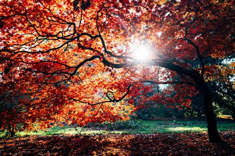 Are you an Autumn Personality? - Sophie Robinson
