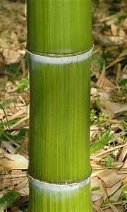 Gros Bambou Deco : liste des bambous ~ Teatrodelosmanantiales.com Idées de Décoration