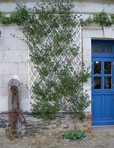 Plantes Grimpantes Mur : murs treillages pergolas tonnelles quel support pour ~ Melissatoandfro.com Idées de Décoration