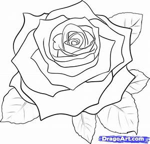 How to Draw a Realistic Rose, Draw Real Rose, Step by Step ...