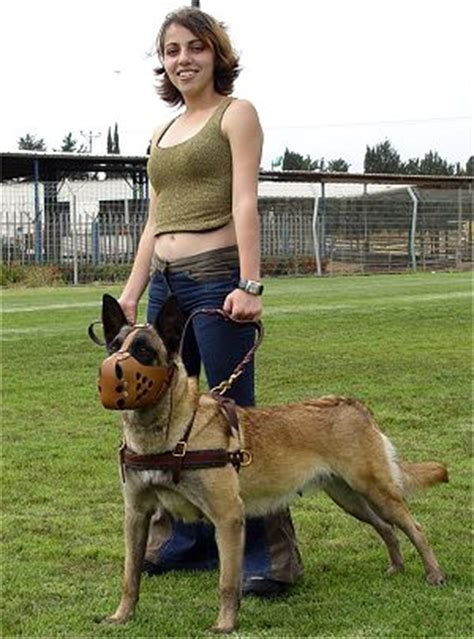 tracking pulling agitation leather dog harness