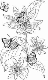 Coloring Pages Adults Printable Flower Adult Flowers Abstract Colouring Sheets Butterfly Pansy Butterflies Print Info Charizard Pokemon Characteristic Special Fairy sketch template