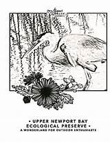 Newport Coloring Beach Pages Visit Bay Conservancy Cove Courtesy Crystal sketch template