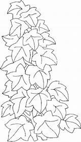 Ivy Climbing Coloring Lierre Pages Drawings Plants Grimpant Vine Dessin Drawing Leaves Outline Leaf Line Du Flower Geranium Template Vines sketch template