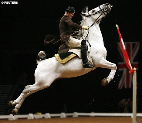 spanish riding lipizzaner stallions famous horses horse born turn stallion jumping lippizaner crimson lipizzaners rider years tide stud they verge