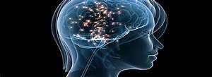 Recensie: Laat je, hersenen Niet Zitten - PsyBlogNL