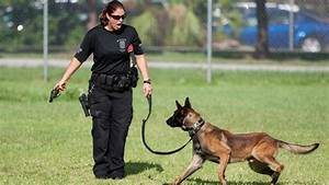in training dog groomed for police work in miami miami With local dog training
