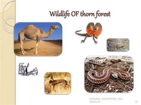 different types of natural vegetation and wildlife