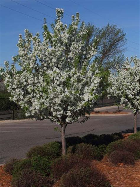 Ecobirder Flowering Trees Are Blooming
